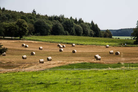 Bales of straw on field in autumn