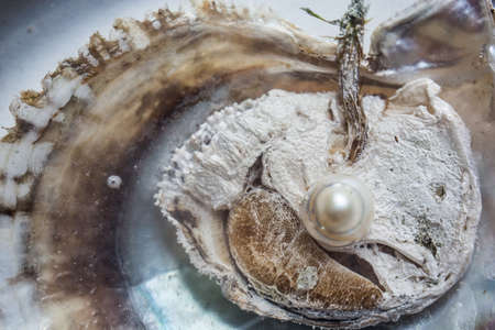 opened oyster with pearl inside