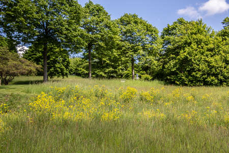 Meadow on the edge of the forest in summer Foto de archivo