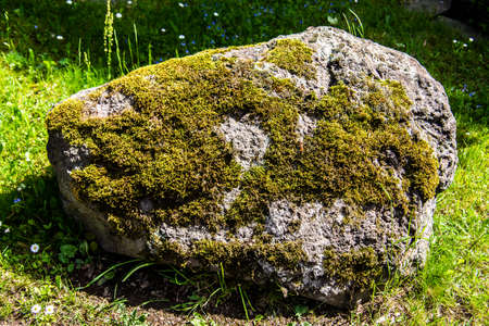 rocky boulder overgrown with moss on meadow