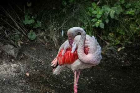 Flamingos with long legs strut around