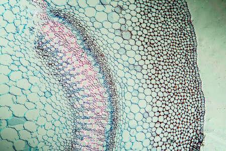 Dead nettle with stem across 100x Stok Fotoğraf