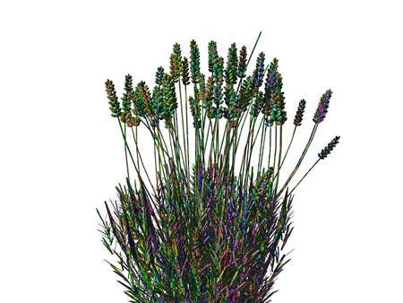 green wild herbs with stems Archivio Fotografico