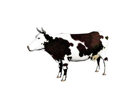 black white spotted cow