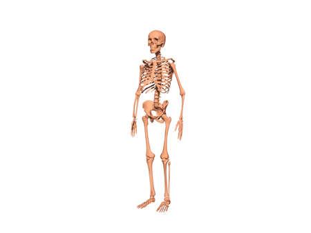Skeleton as an undead bone man 版權商用圖片