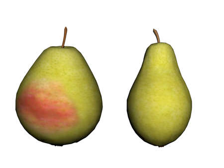 red cheeked pears with stem