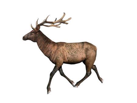 Deer with brown fur in the clearing Banco de Imagens