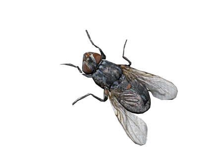 annoying housefly on the wall