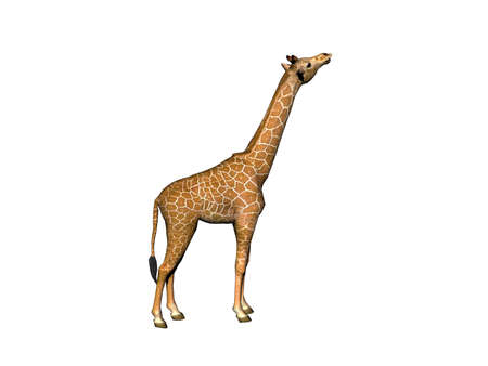 spotted giraffe with a long neck in the steppe of Africa