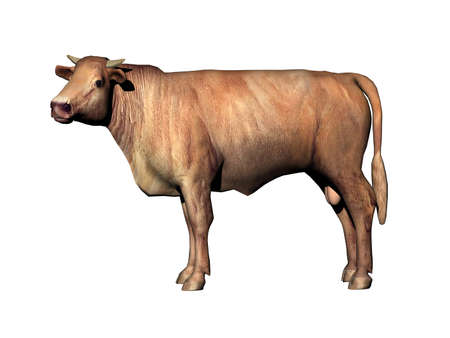 Cow as a meat supplier runs around in the pasture