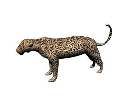 muscular leopard in the steppe Zdjęcie Seryjne