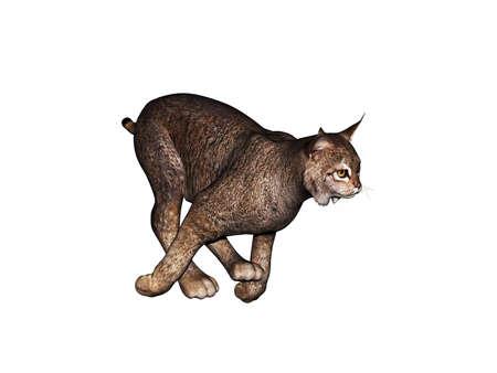 heavy muscular puma jumping