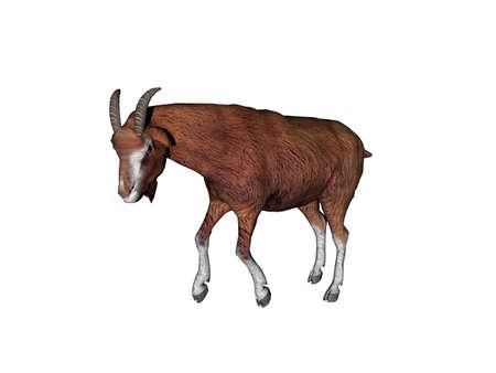 Goat foraging in the pasture Foto de archivo