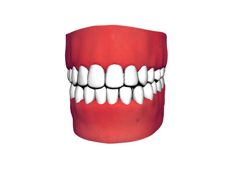 Bit with red gums and flawless white teeth