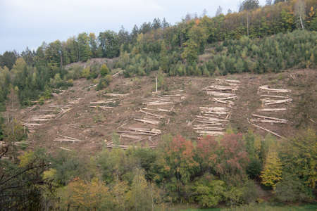 Logging work in the autumn coniferous forest
