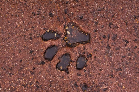 stone lion: The puddle in the footprint of the big cat Stock Photo