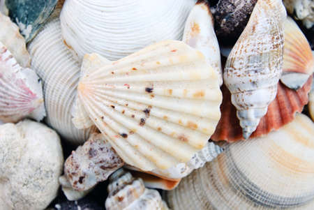 shells isolated photo
