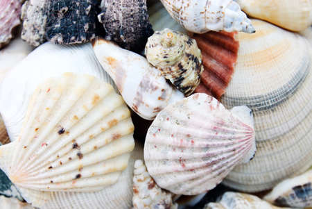 shells isolated Stock Photo - 14445859