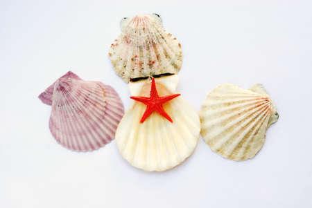 shells isolated Stock Photo - 14445851