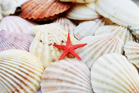 shells isolated Stock Photo - 14445857