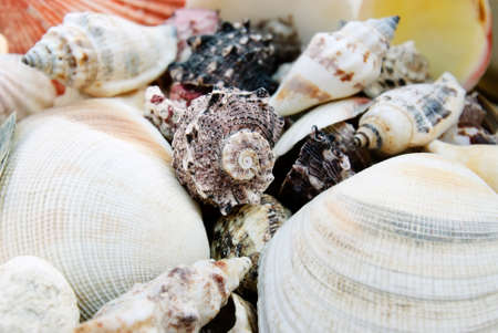 shells isolated Stock Photo - 14445855