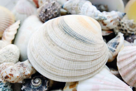 shells isolated Stock Photo - 14445854