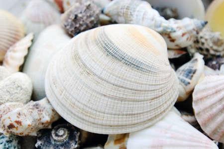 shells isolated Stock Photo - 14445854