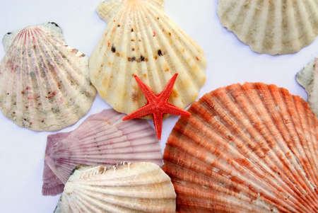 shells isolated Stock Photo - 14445860