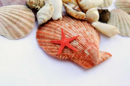 shells isolated Stock Photo - 14445856