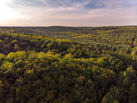 Aerial top view of summer green trees in forest in rural Poland. Drone photography