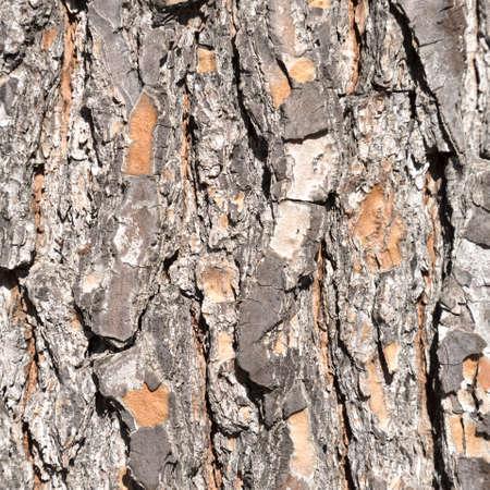 Close up view of natural tree bark, texture