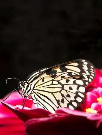 Beautiful butterfly posed on a flower Stock Photo