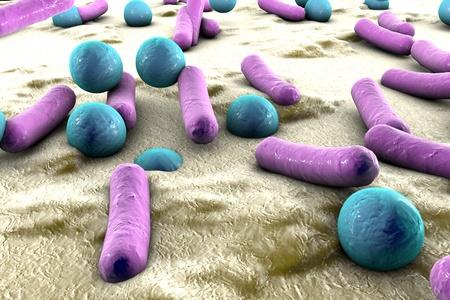 bacterias: Las bacterias en la superficie de la piel o membrana mucosa, el modelo de estafilococos y estreptococos, modelo de microbios, las bacterias simulando microscopio electr�nico, bacterias pi�genas, bacterias ent�ricas