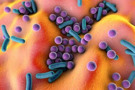 Bacteria on the surface of skin or mucous membrane, model of staphylococcus and streptococcus, model of microbes, bacteria simulating electron microscope, pyogenic bacteria, enteric bacteria Stock Photo