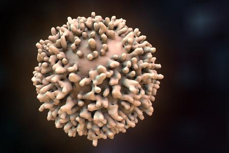 B-lymphocyte. Immune cell. Antibody-producing cell