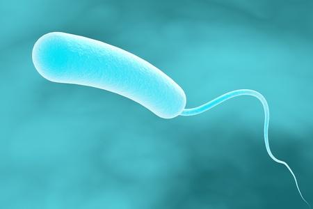 colera: Dibujo tridimensional de Vibrio cholerae, el modelo de las bacterias, ilustraci�n realista de microbios, los microorganismos, bacteria que causa el c�lera
