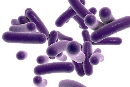 白い背景を細菌のモデル、微生物、微生物、コレラを引き起こす細菌のリアルなイラストで分離したコレラのイラスト