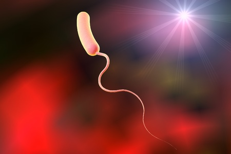 medical fight: Digital illustration of Vibrio cholerae, model of bacteria, realistic illustration of microbes, microorganisms, bacterium which causes cholera