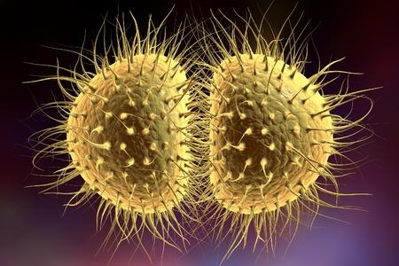 neisseria: Digital illustration of bacteria Neisseria gonorrhoeae or Neisseria meningitidis, gonococcus and meningococcus on colorful background; closeup view Stock Photo