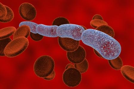 bacterias: Dibujo tridimensional de la bacteria en forma de bastón en la sangre con glóbulos rojos, streptobacilli, Bacillus anthracis, antrax, modelo de bacterias, ilustración realista de microbios, los microorganismos
