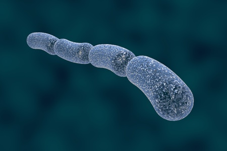 microorganisms: Three-dimensional drawing of rod-shaped bacteria in blue color, streptobacilli, Bacillus anthracis, antrax, model of bacteriarealistic illustration of microbes, microorganisms, bacteria Stock Photo