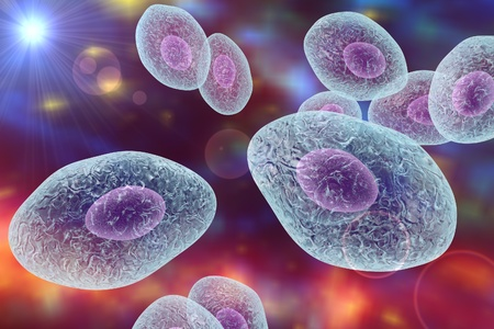pneumonia: Pneumocystis carinii, opportunistic fungus which causes pneumonia in patients with HIV Stock Photo