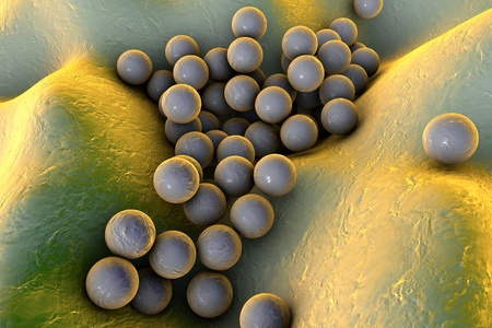 Bacteria Staphylococcus aureus on the surface of skin or mucous membrane, model of staphylococcus, superbug, MRSA, model of microbes, bacteria simulating electron microscope, pyogenic bacteria
