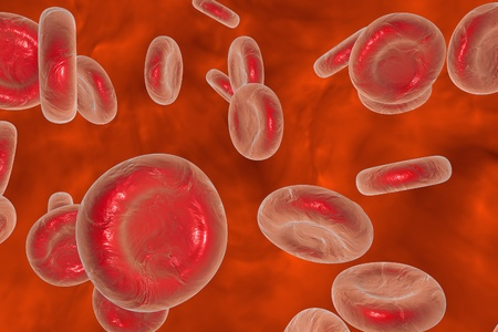 circulatory: Microscopic view of red blood cells, background with red blood cells, scientific background, medical background, circulatory system, cardiovascular system