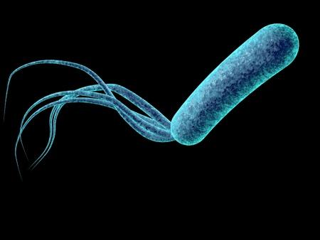 Digital illustration of bacteria Pseudomonas aeruginosa isolated on black background, model of bacteria, realistic illustration of microbes