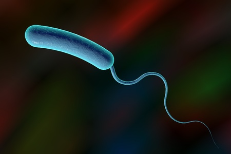 cholera: Digital illustration of Vibrio cholerae, model of bacteria, realistic illustration of microbes, microorganisms, bacterium which causes cholera