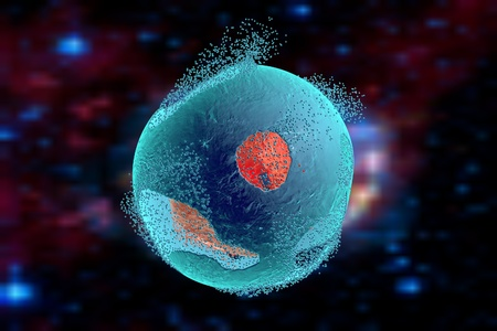 apoptosis: Cell lysis. Destruction of a cell. Can be used to illustrate effect of drugs, medicines, microbes, nanoparticles, apoptosis