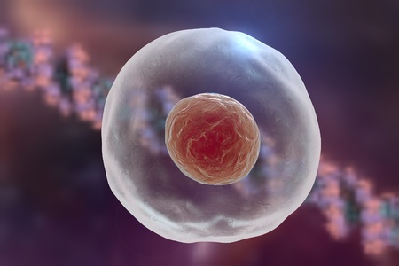 human cell: Human or animal cell on a background with DNA Stock Photo