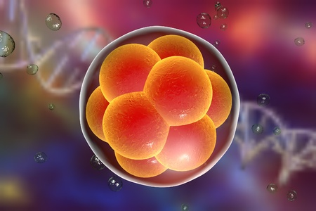 Human embryo on the stage of 16 cells on background with DNA Foto de archivo
