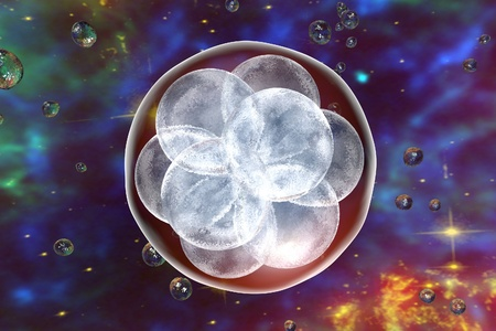 reproductive technology: Human embryo on the stage of 16 cells on space background with galaxies. Elements of this image furnished by NASA Stock Photo